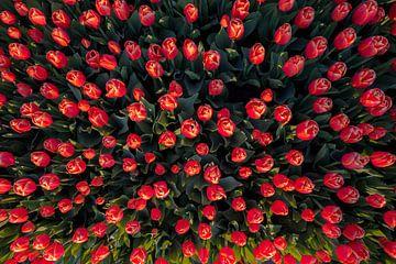 Tulpeninvasion von Peter Deschepper