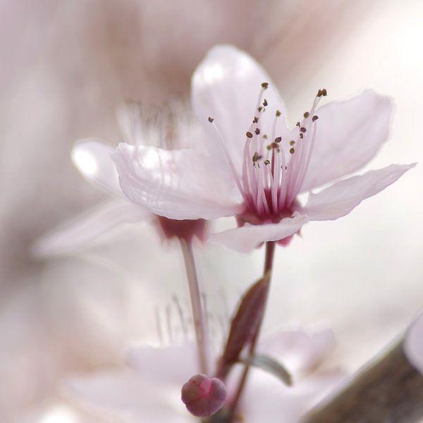 Frühlings Impressionen einer Kirschblüte van Tanja Riedel