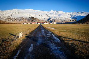 IJslandse boerderij van
