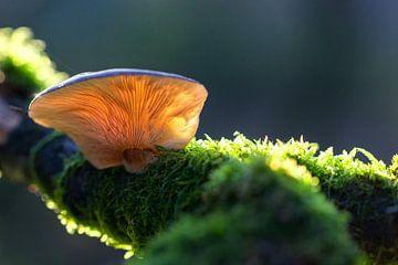 paddenstoel op een tak van