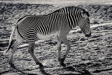 Schwarz und Weiß in Schwarz und Weiß von Fotografie Jeronimo
