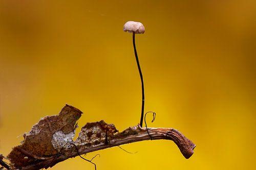 Mini paddenstoel van René Vos