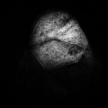 Van achter belicht blad in zwart-wit. van TimJonkerphotography