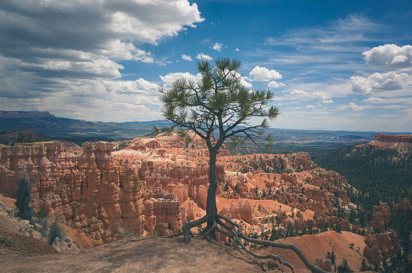 Lonely tree in Bryce National Park sur Jasper van der Meij