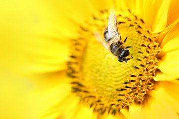 Honingbij van Michelle Zwakhalen