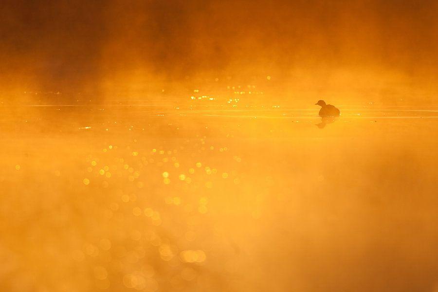 Dodaars in goud van Johannes Klapwijk