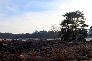 Soesterduinen, Nederland von Alles Erop