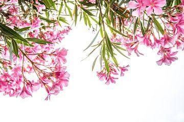 Rosa tropische Blumen auf weißem Hintergrund von Iris Koopmans