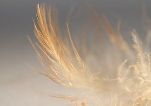 Feather in colour