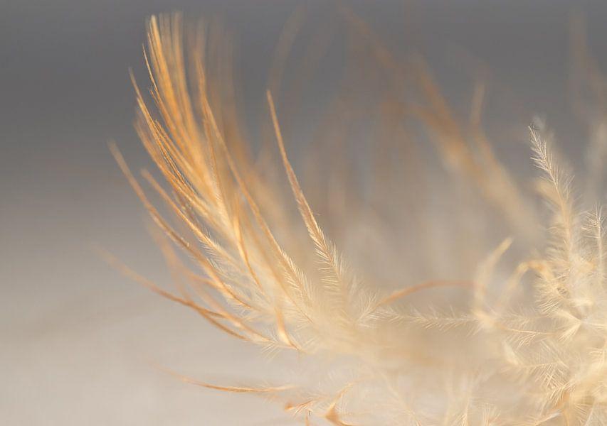 Feather in colour van Greetje van Son