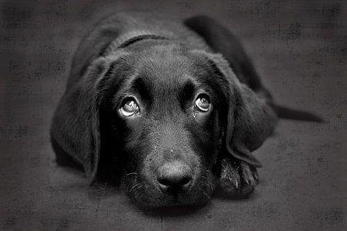 Puppy Dog van
