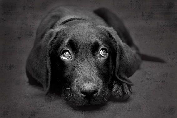 Puppy Dog van Carolien van den Brink