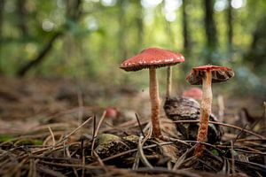 Paddestoelen in het bos 05