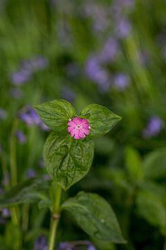 Roze bloem in een zee van paarse bloemen van
