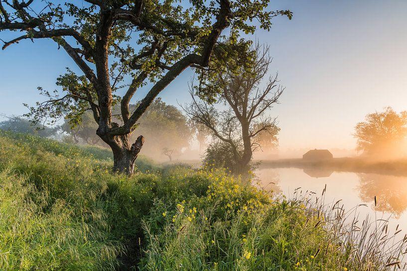 Gouden licht tijdens een magische ochtend op het Werk aan de Groeneweg 2 van Jeroen de Jongh