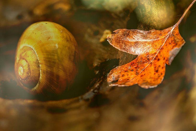 Autumn dream van Irene Lommers