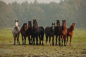Nieuwsgierige paarden (III)