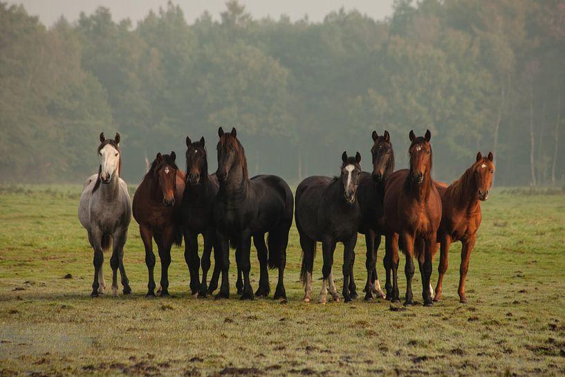 Nieuwsgierige paarden (III) van Anneke Hooijer