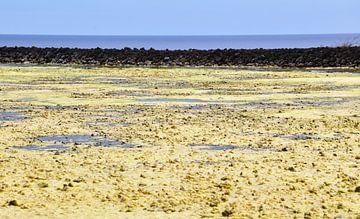 Gelbe Salzflächen von Ingrid Bargeman