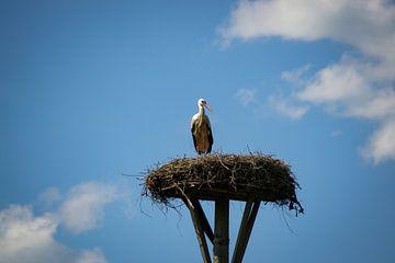 Der Storch und sein Nest von Jesse Lamberink