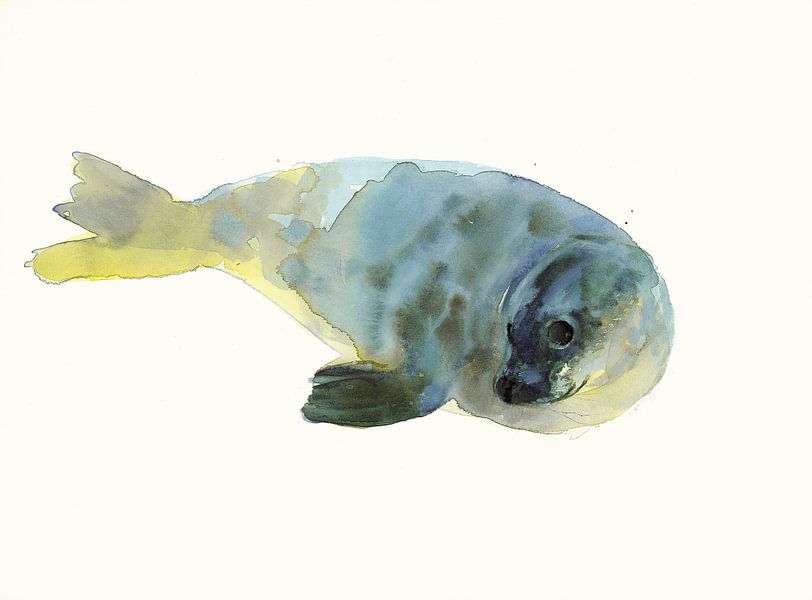 Aquarell-Robbe von Mark Adlington