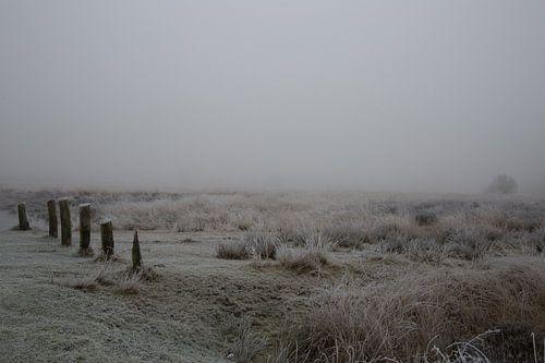 Mist en rijp in Drenthe van