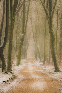 Fussweg durch einen Buchenwald an einem nebligen Wintermorgen von Sjoerd van der Wal