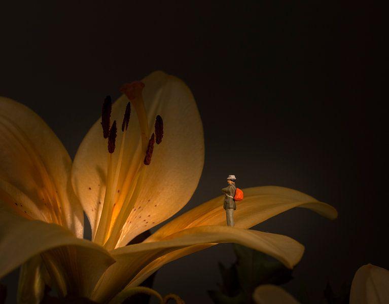flower exposition van Compuinfoto .