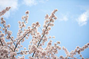 Bloesemtakken in de lente van Maria-Maaike Dijkstra