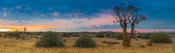 Panoramafoto van de Kalahari woestijn met kokerboom, Namibië van
