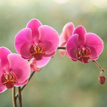 Orchidee von Jurgen Corts