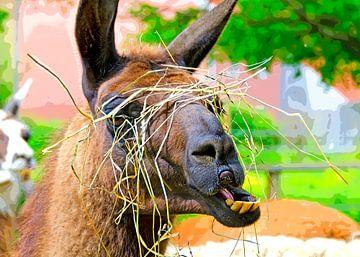 Lama van Leopold Brix