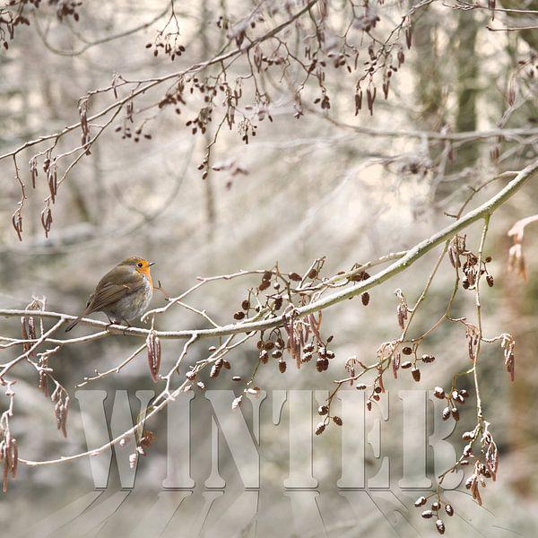 Winter van Teuni's Dreams of Reality