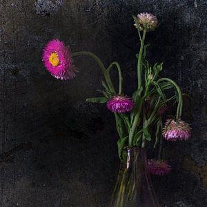 One will shine. van Danny den Breejen