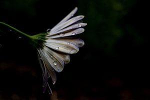 Treurige bloem