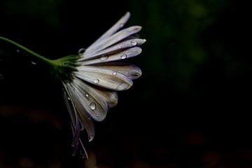 Treurige bloem van