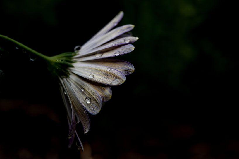 Treurige bloem van Miranda Snoeijen