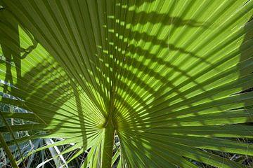 Wallpaper - Tropical 11 van Veerle Van den Langenbergh