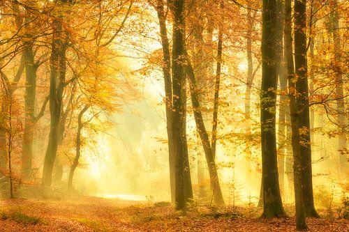 Pad door een nevel bos tijdens een mooie mistige herfstdag