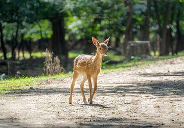 Bambi het hertje van