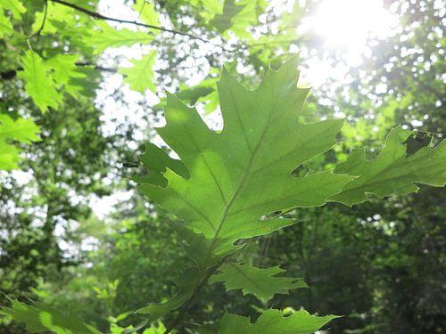 groen blad met lichtstralen