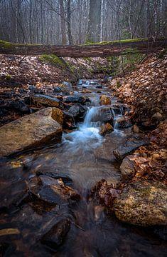 Ruisseau et forêt
