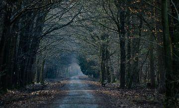 bospad van Eugene Lentjes