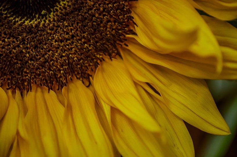 zonnebloem van Ettie van der Meulen-Vermaning