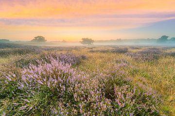 Heidelandschap in mist kort voor zonsopgang van Michael Valjak