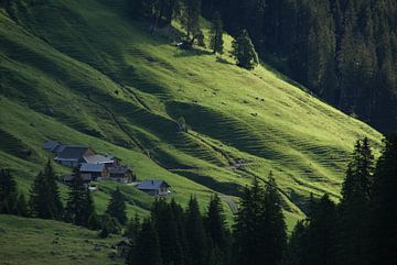 strijklicht over een alpenweide (Rellstall, Vandans, Montafon, Vorarlberg, Oostenrijk), vroeg in de  van