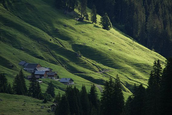 strijklicht over een alpenweide (Rellstall, Vandans, Montafon, Vorarlberg, Oostenrijk), vroeg in de