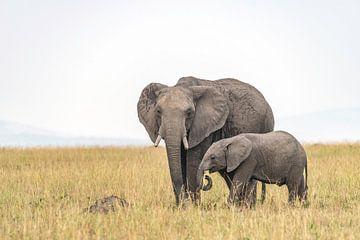 Afrikanischer Elefant von Jessica Blokland van Diën