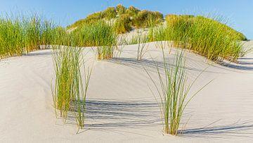 Sanddünen mit Dünengras auf Terschelling