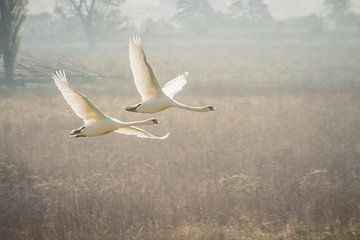 Die fliegenden Schwäne von Riccardo van Iersel